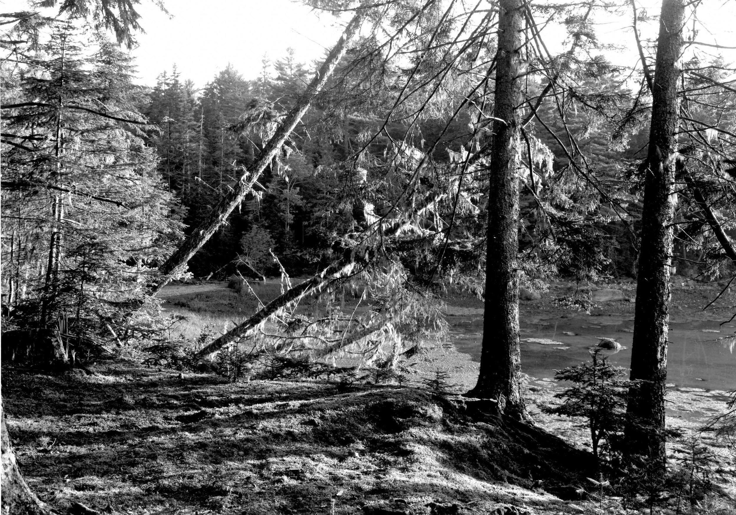 Doans Pt. Woods, Sorrento