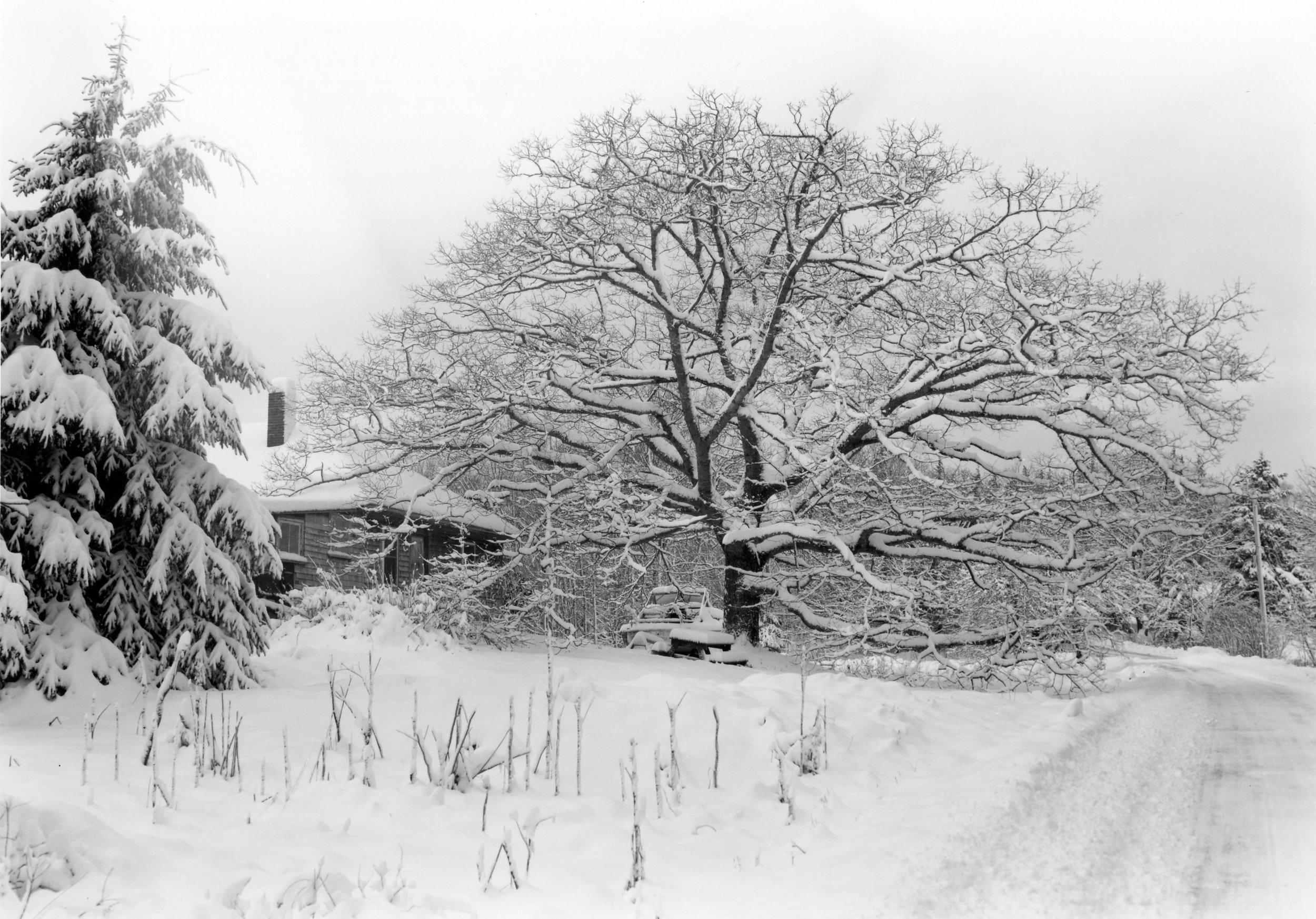 Andrew's Oaktree Sorrento, Maine