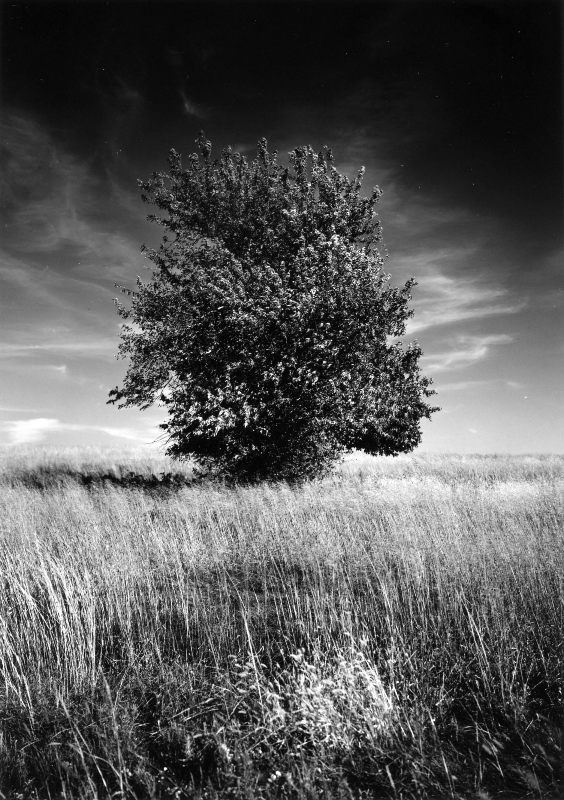 The Land Instatute, Hagg Property, Salina, KS