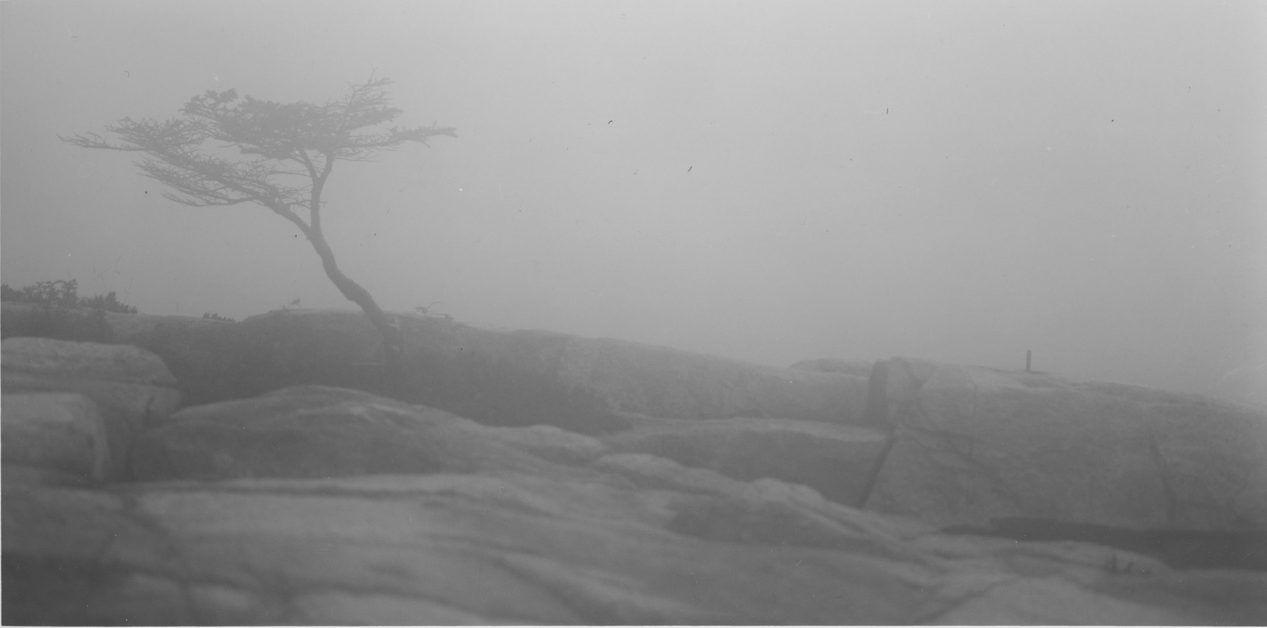 Sarah's Tree Fog Coastal Maine