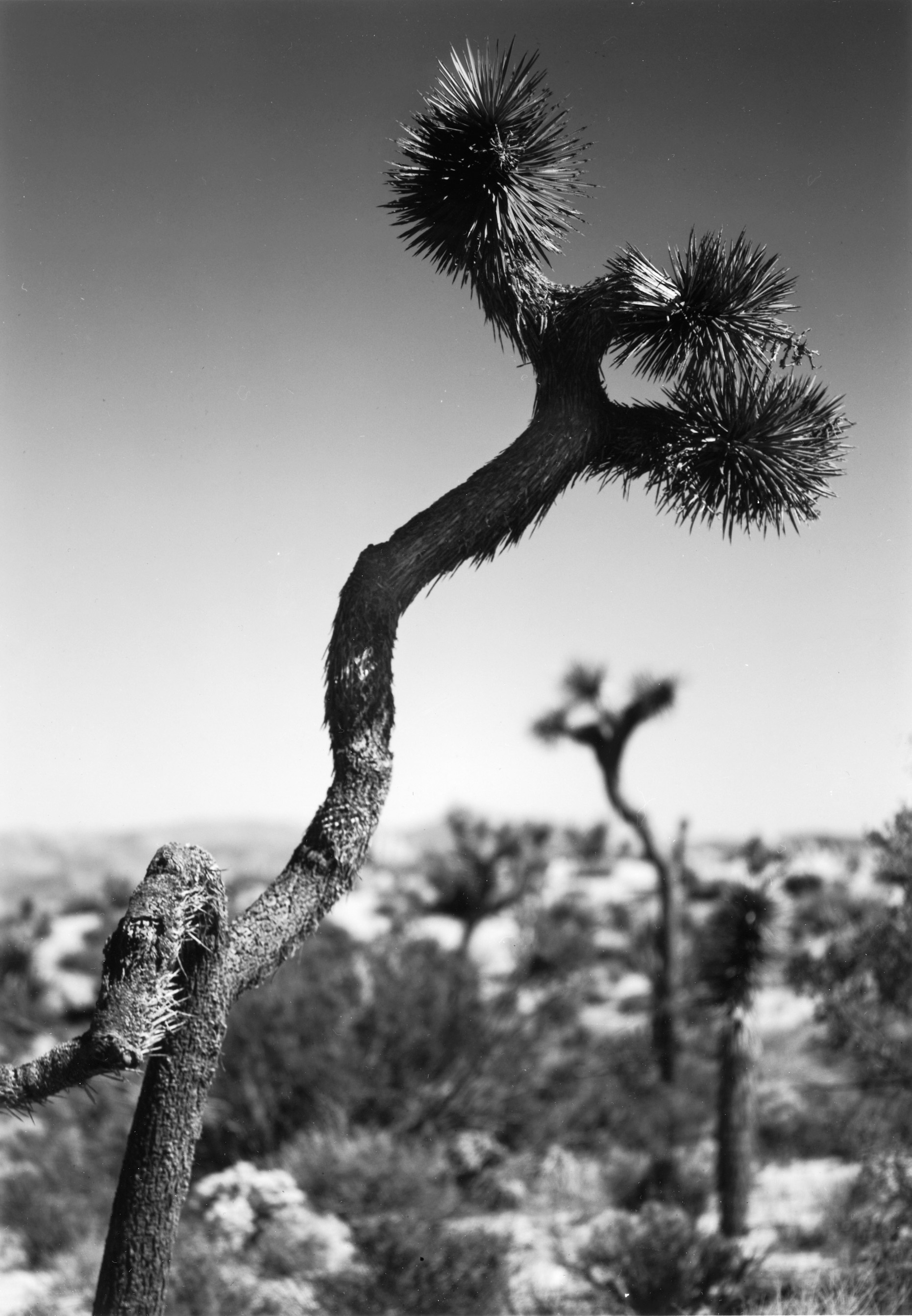 Joshua Tree NP  California