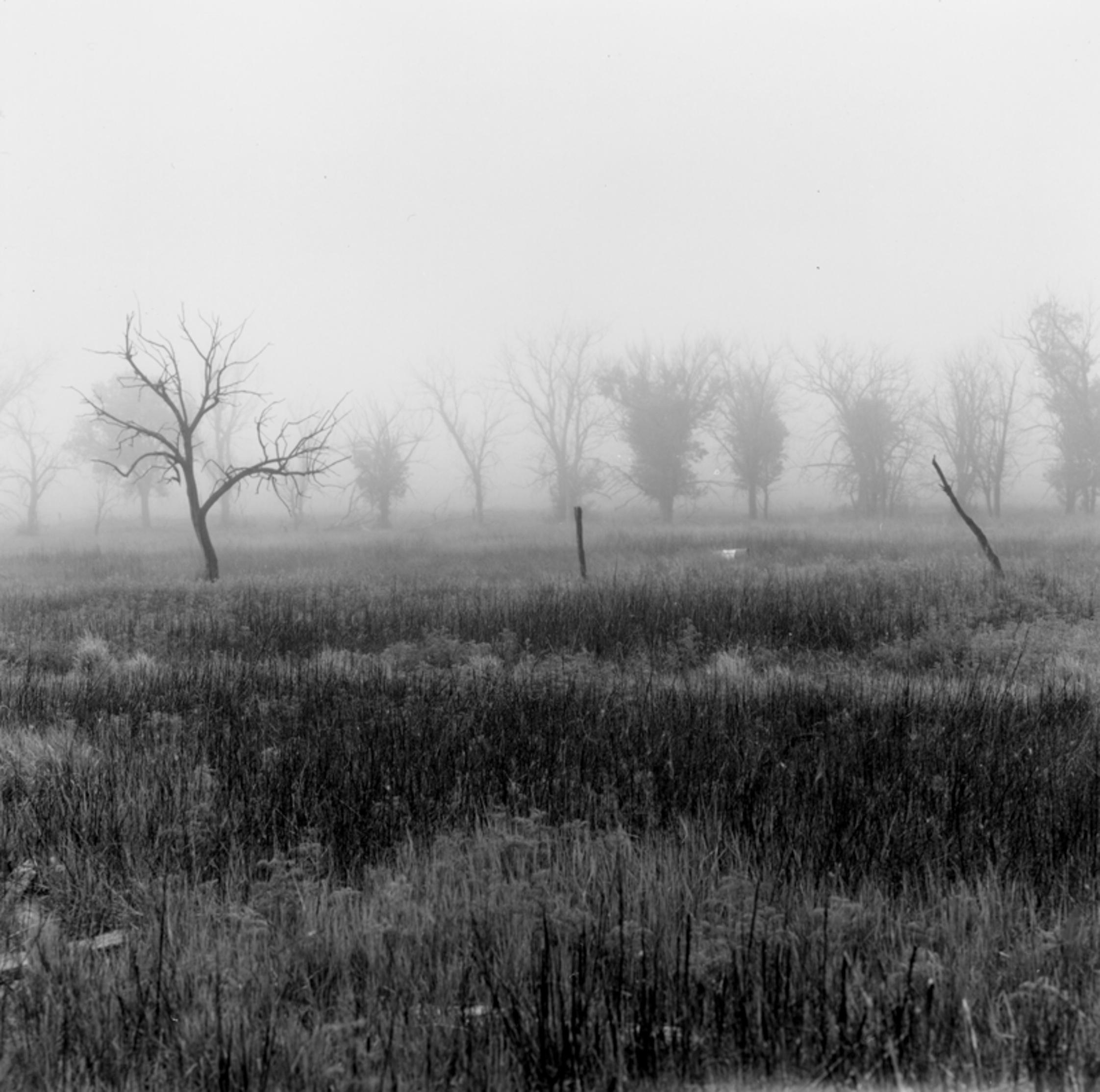 Fog Abandoned Ranch
