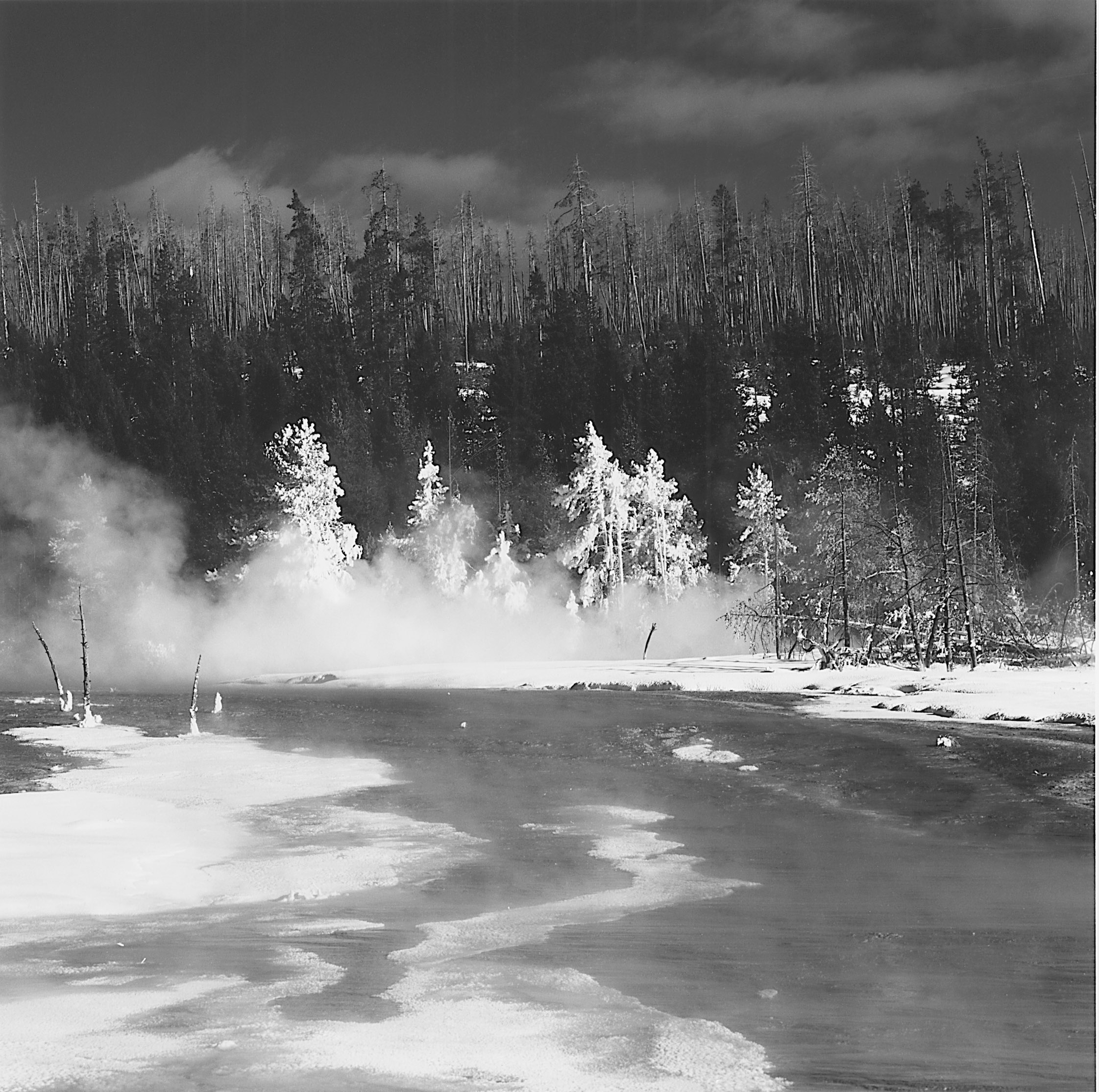 Frosted Trees, West Thumb, Geyser Basin Yellowstone National Park,