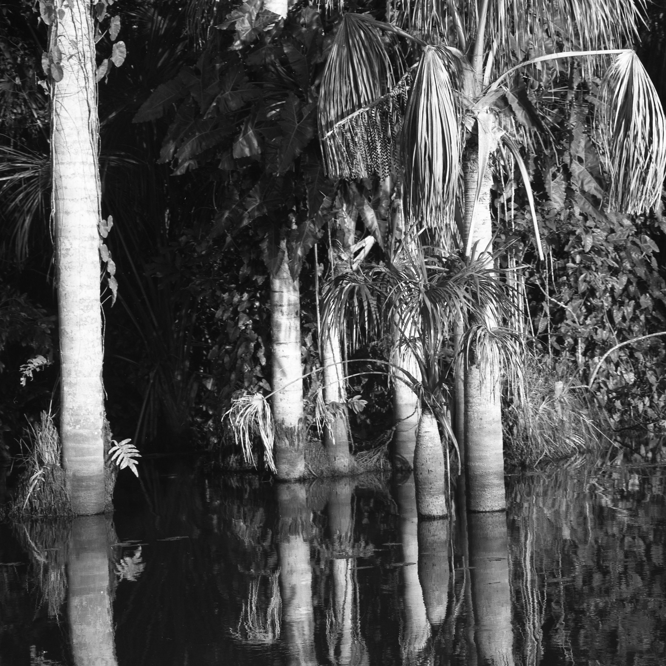 Tambopata National Reserve Sandoval Lake, Peru