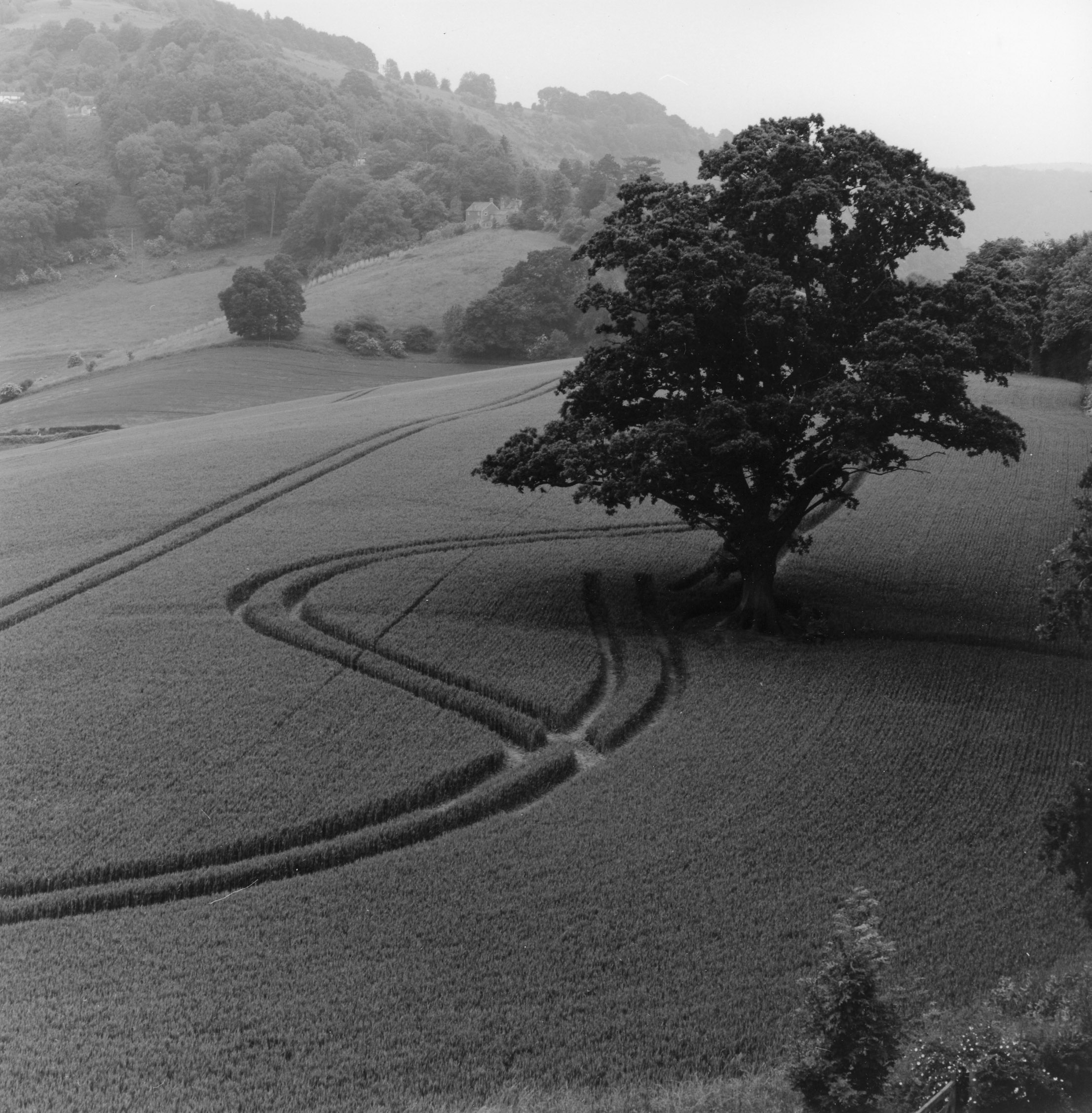 Goodrich Castle  Wheatfield Herefordshire, Wales