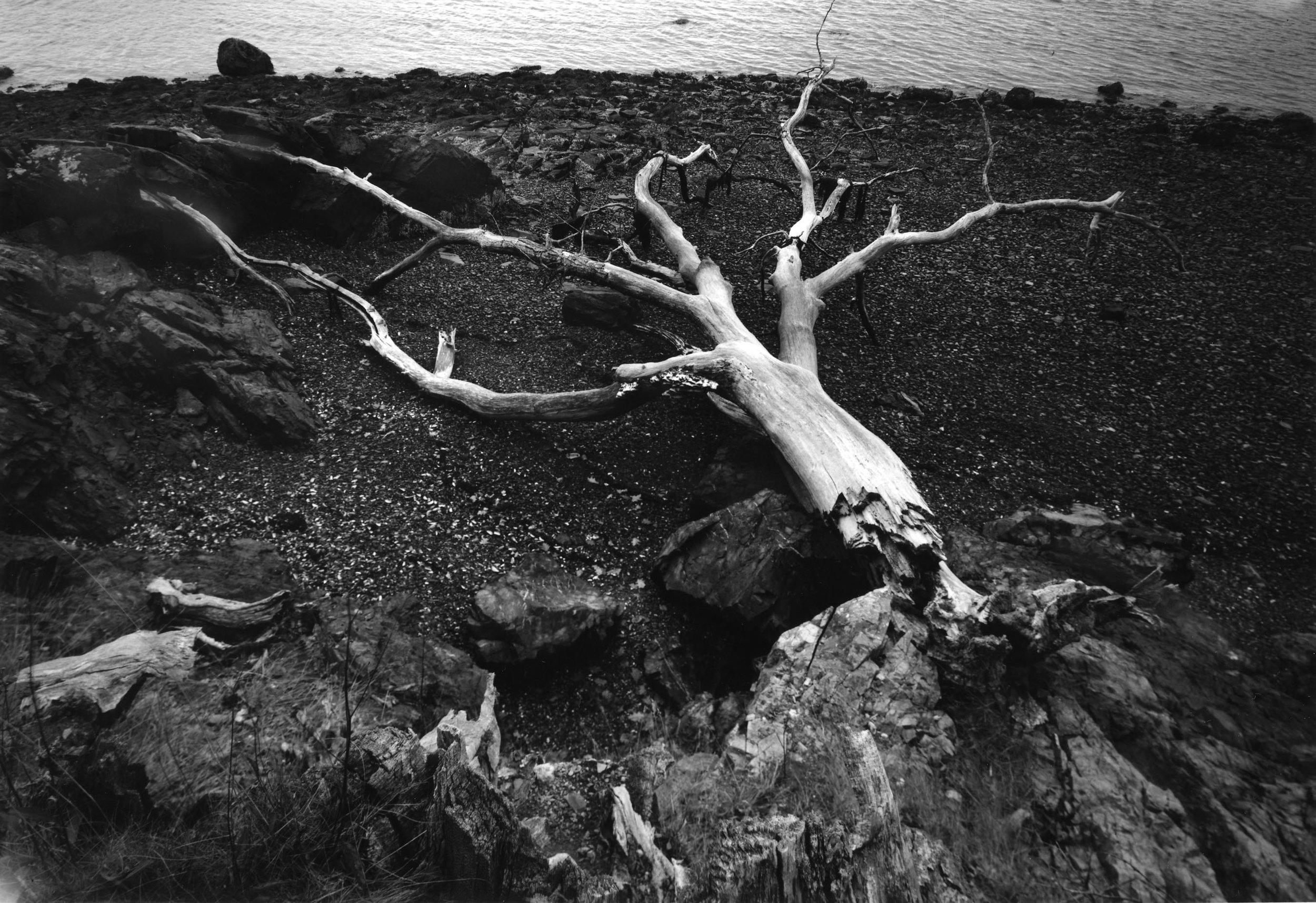 Fallen Oak Sorrento Frenchman Bay Maine