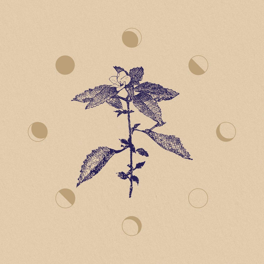 StevieLeigh_LogoGif-1.jpg
