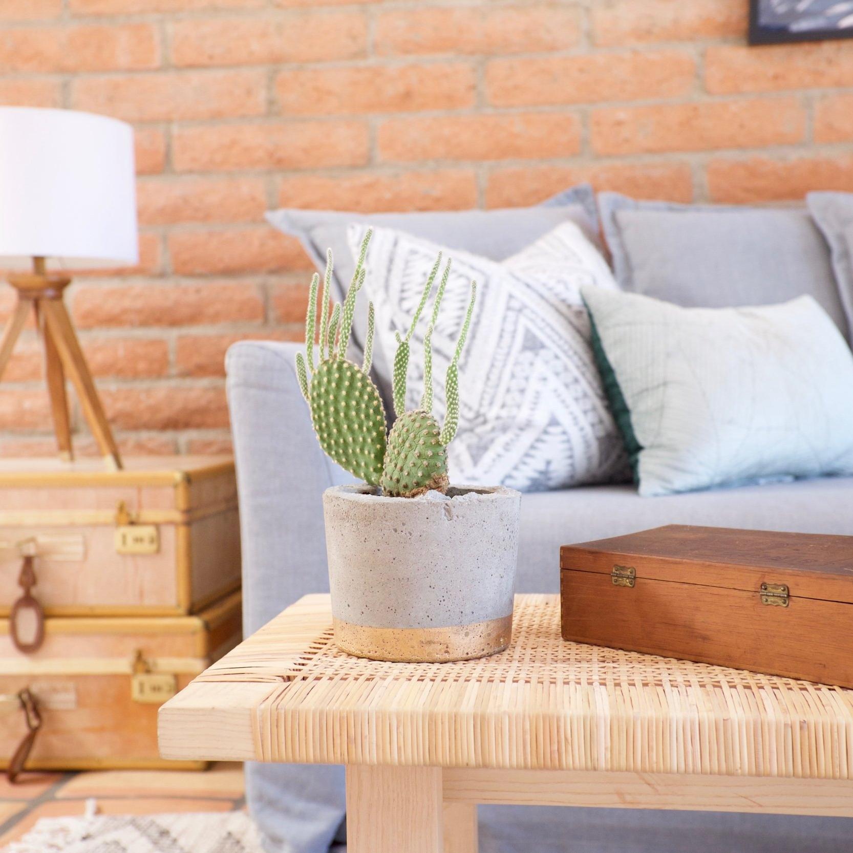 comfy Cactus Airbnb