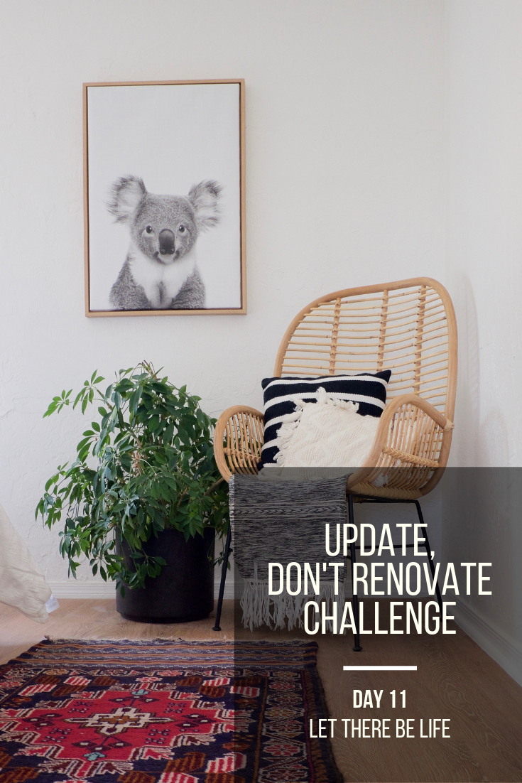 Update, Don't Renovate Challenge Day 11: Let there Be life
