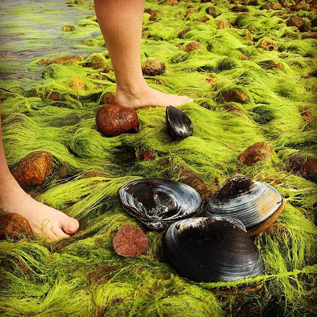 2 feet, 4 clams