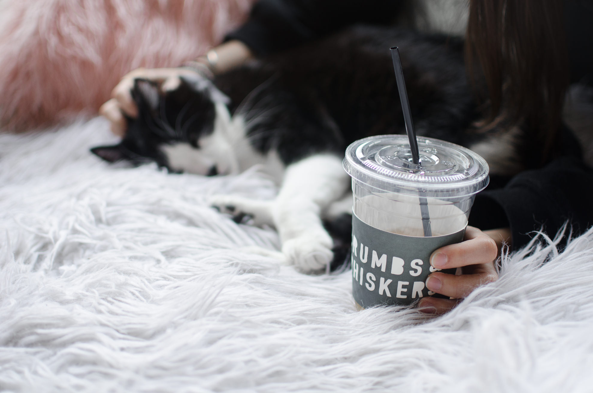 Crumbs & Whiskers Cat Cafe Melrose Los Angeles Miranda Kelton Photography