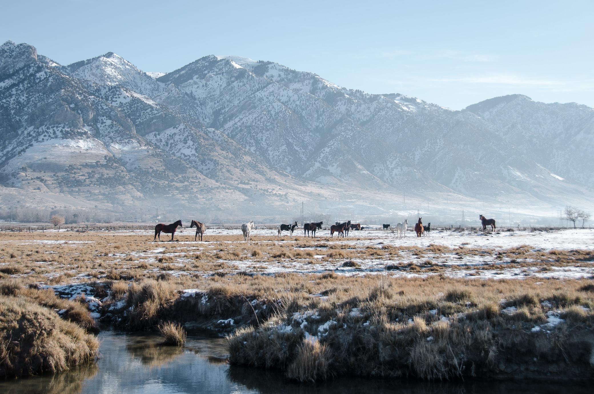 Salt Lake City Utah Roadtrip Horses Snow Miranda Kelton Photography-2.jpg