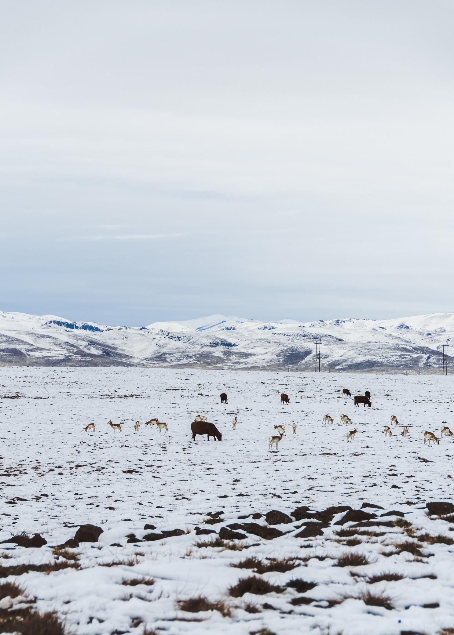 roadside wildlife - Here, there, & everywhere…