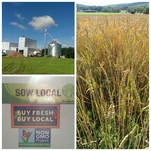 The perfect day for a drive to pick up grain at #smallvalleymilling! #buyfreshbuylocal #localfood #localgrown