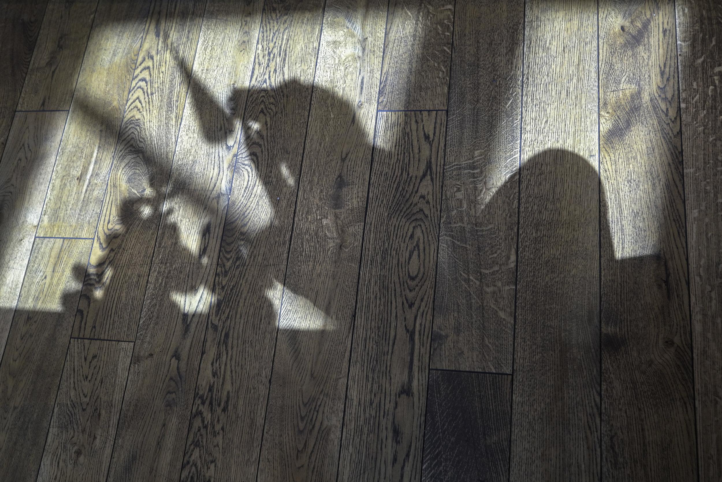 Self-shadow-photo.jpg