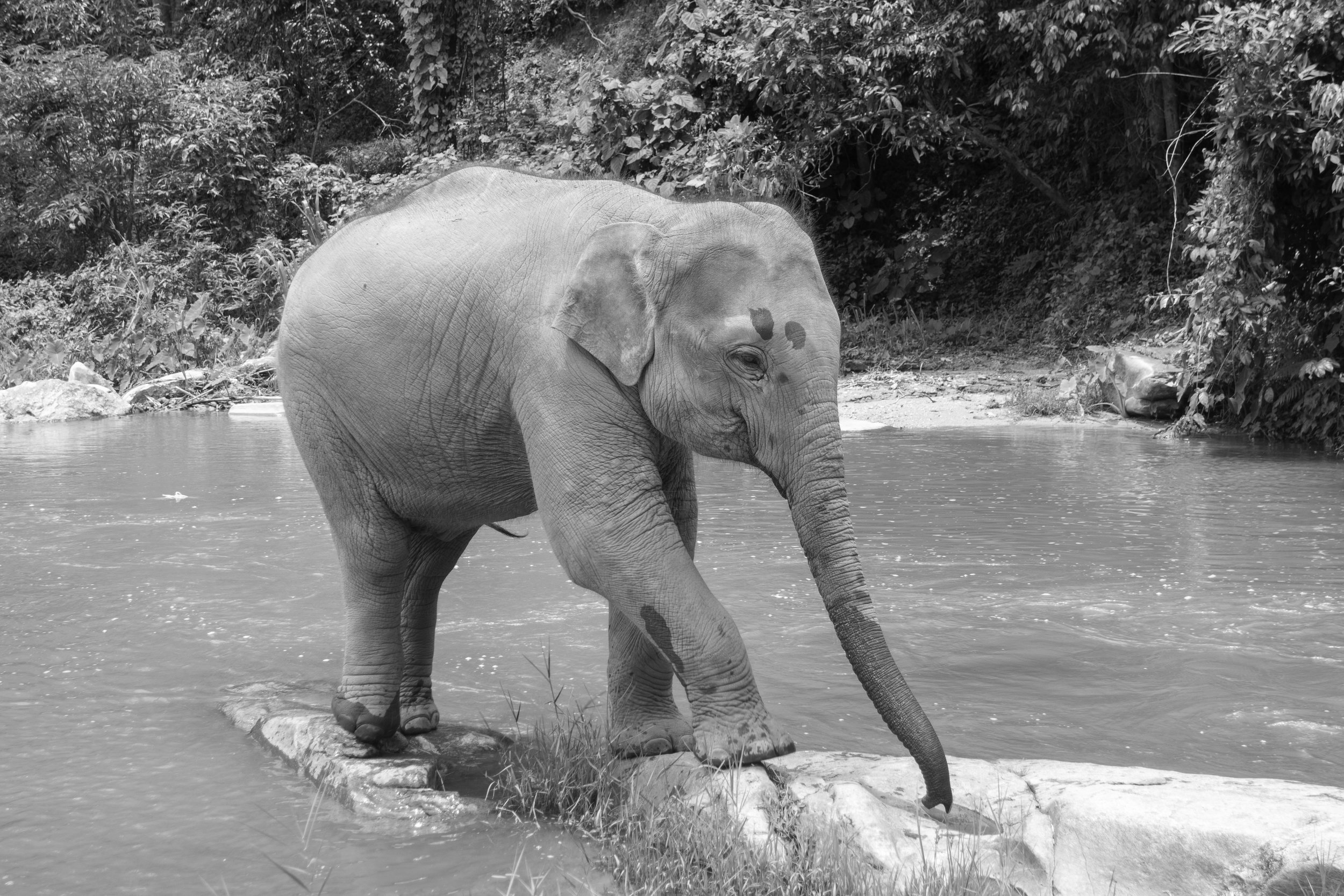 The-world-of-elephants-black-and-white-Thailand-cute-elephant.jpg