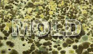 Mold Spores