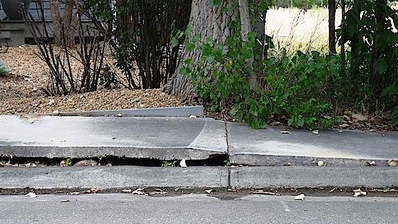 figure_48_tree_damage_concrete.jpg