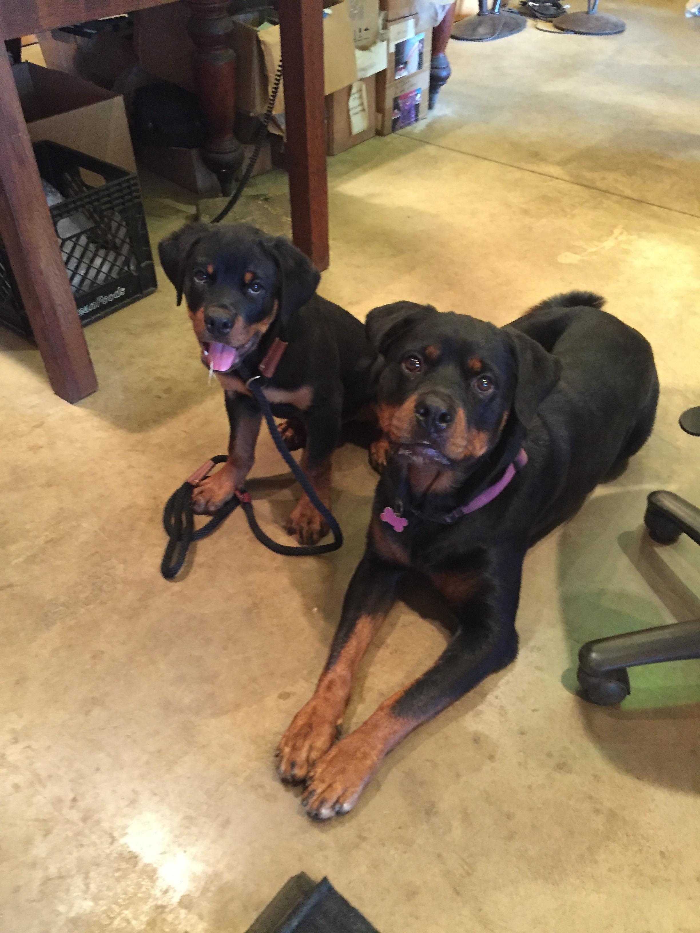 bella and duke bonding31.jpg