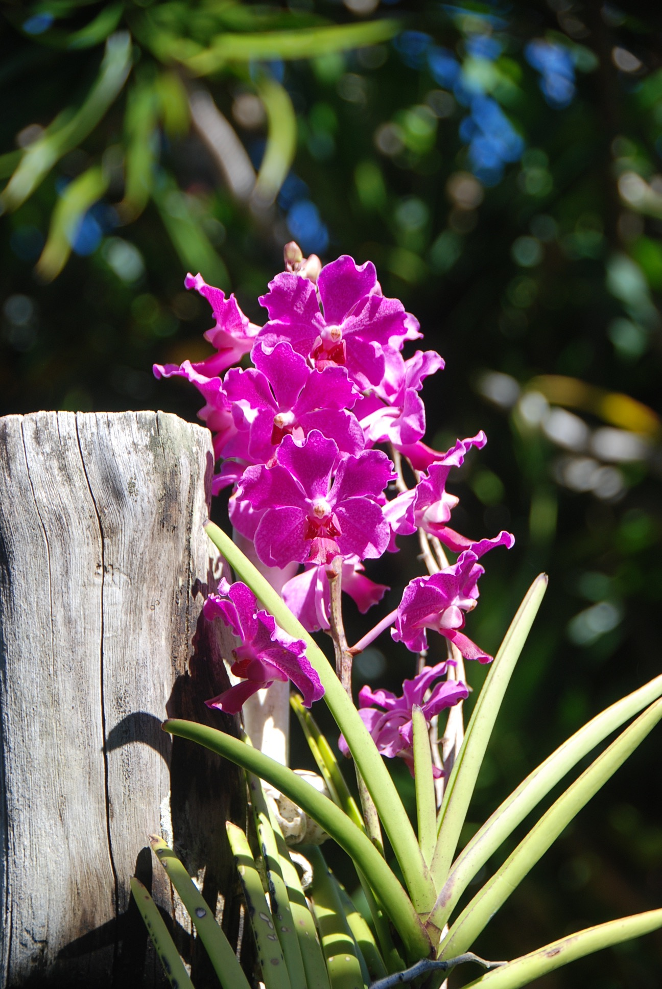 orchids right outside from my shop. 2016