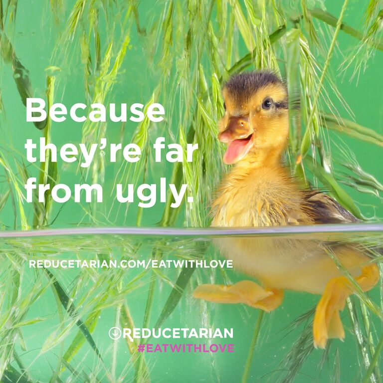 Because they're far from ugly.