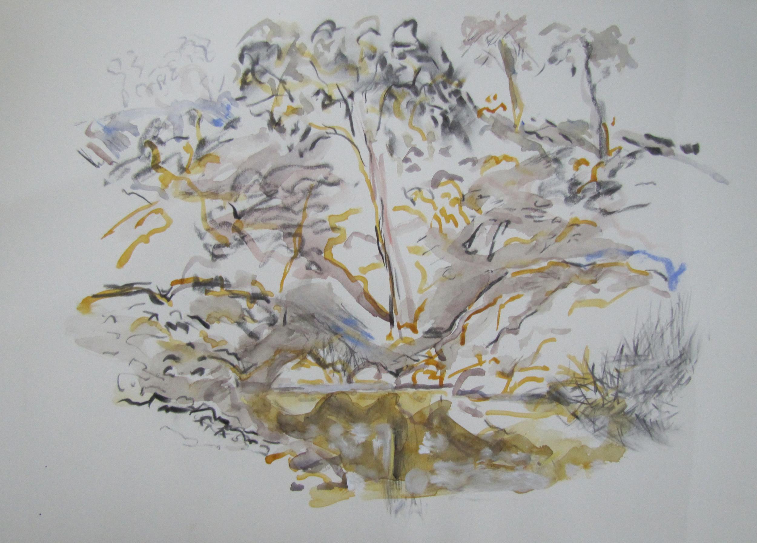 Balgalal Creek.  2003