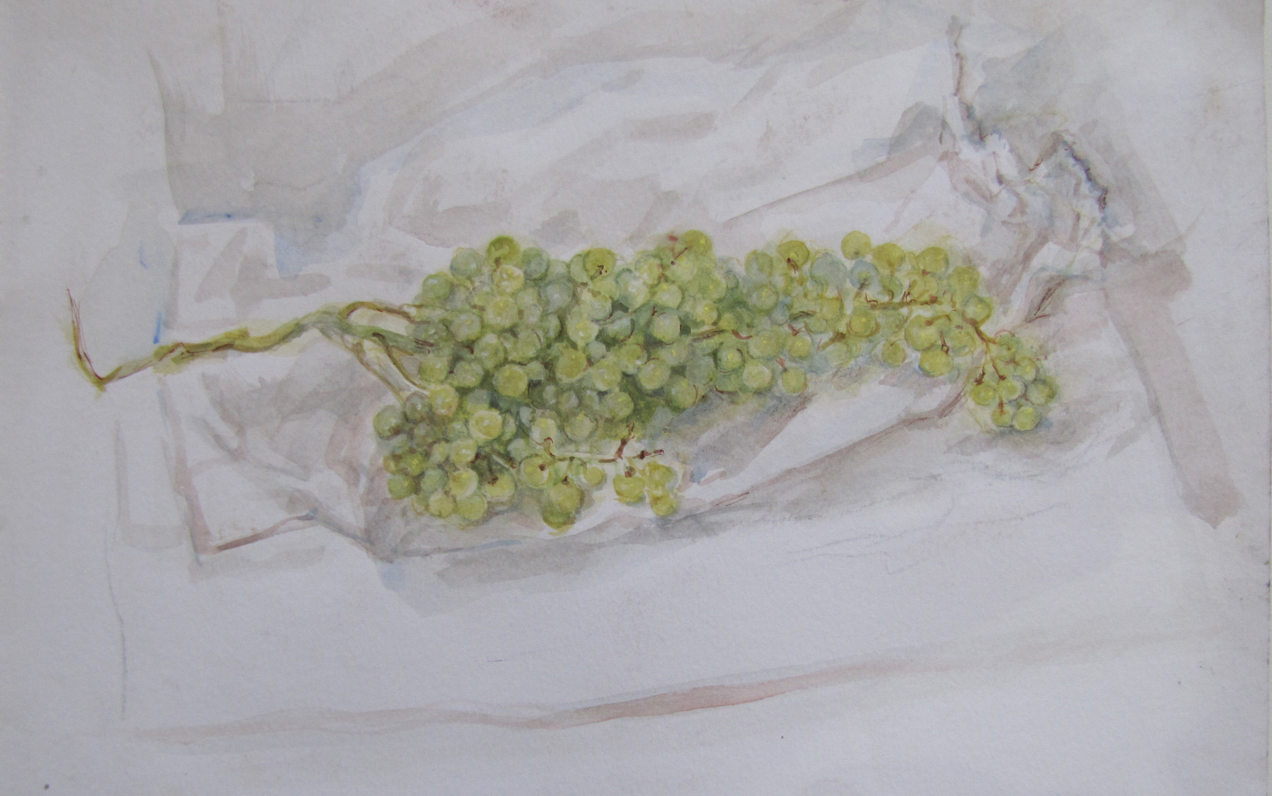 Study. Green grapes cluster. Scribble Rock. Summer. 2005.  Watercolour, pencil and pastel on paper. 25 x 32.5 cm. $2,200