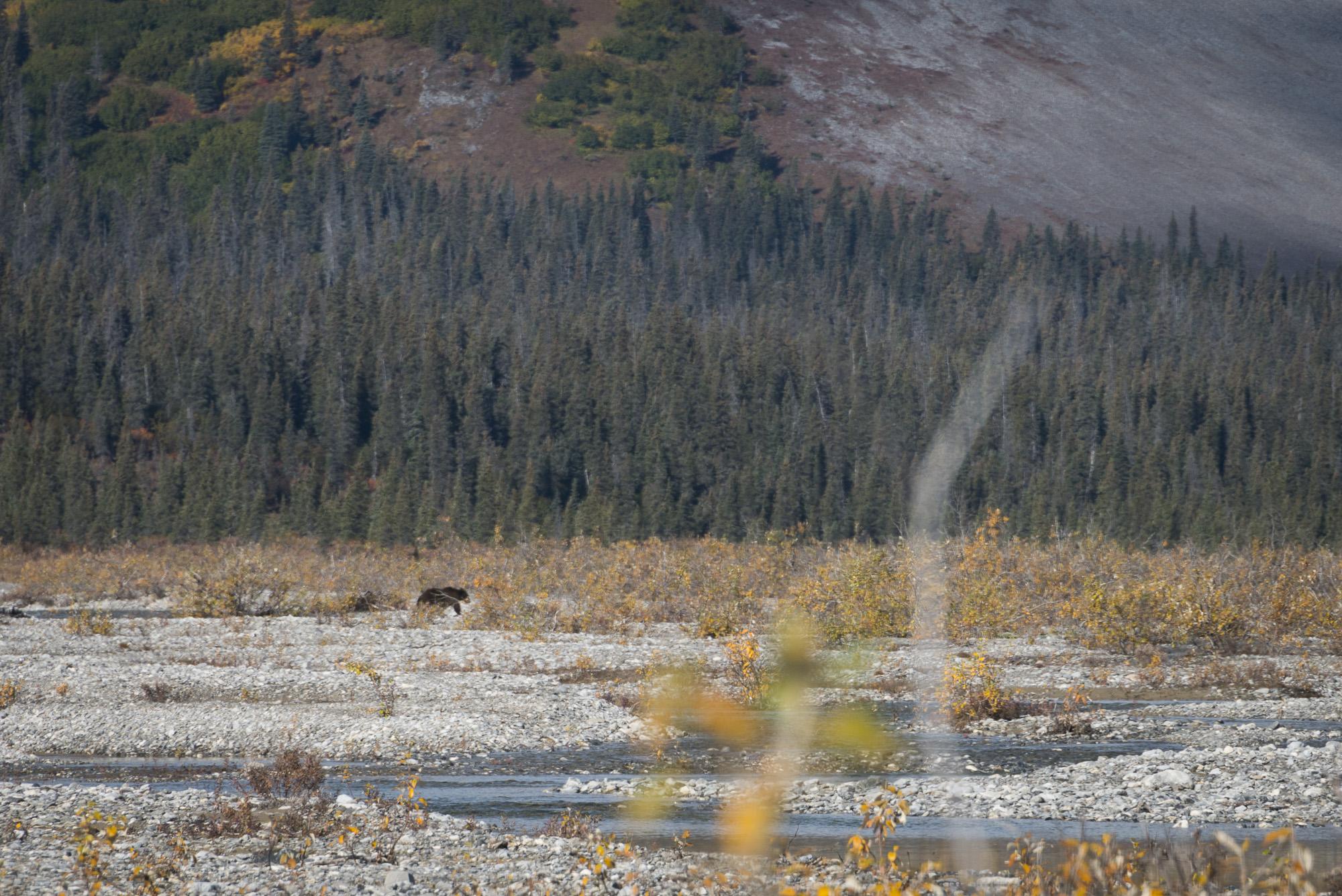 Black bear heading towards camp.