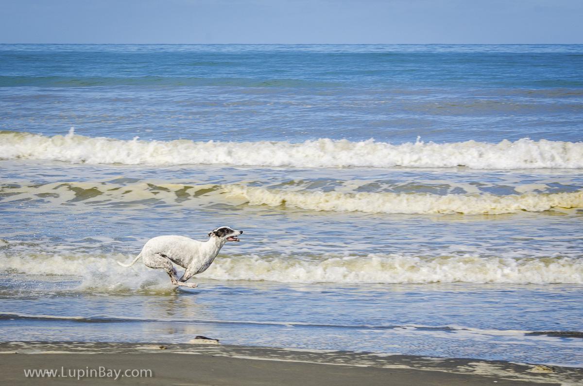 LupinBay-Ghost-Greyhound-5995