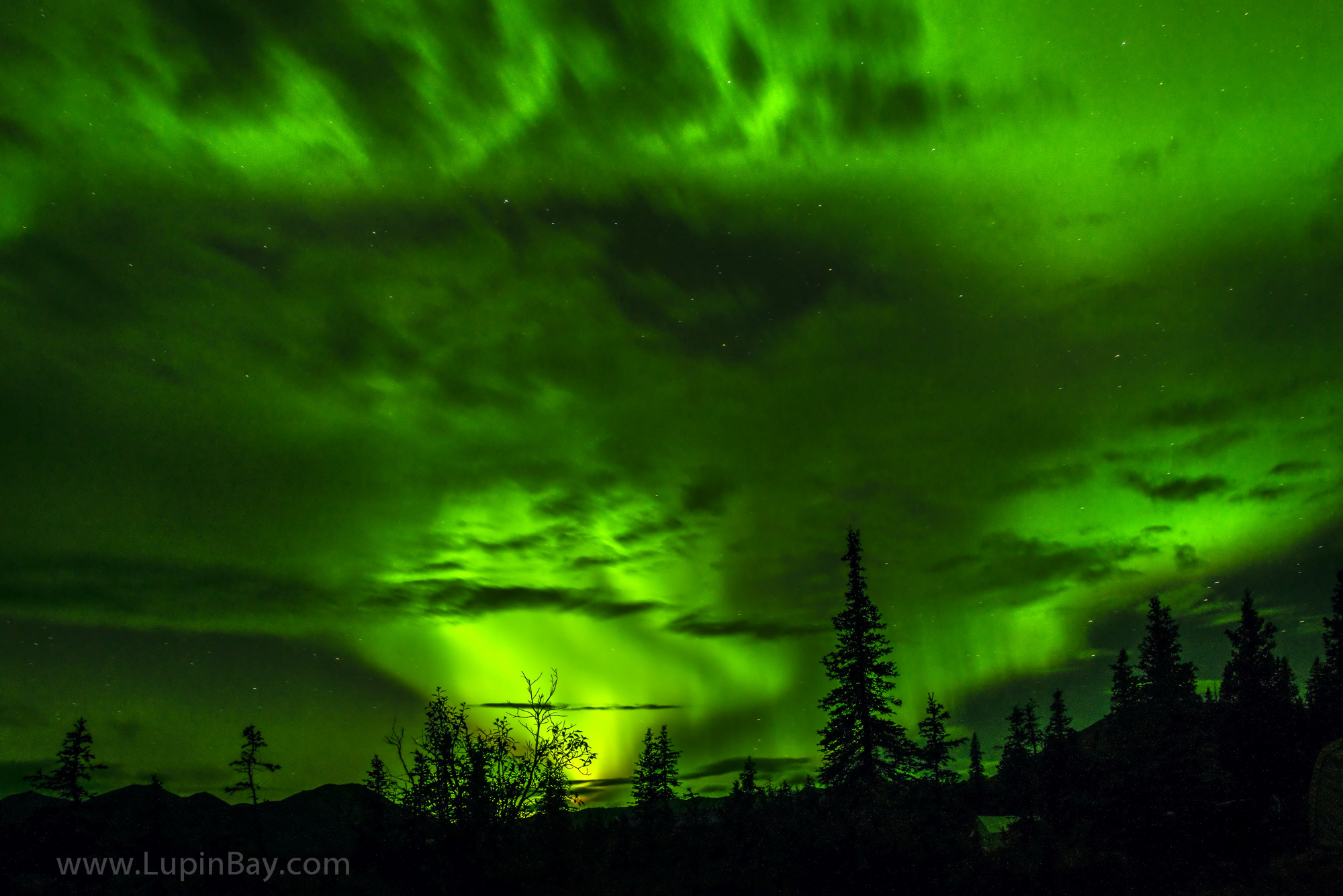LupinBay-Alaska-Northern Lights-2215.jpg