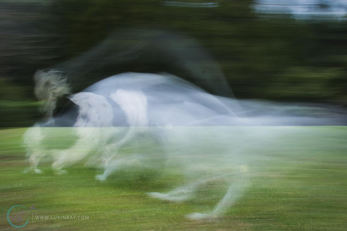 LupinBay_0046_Rocky_Horse_P52_Motion-4195.jpg