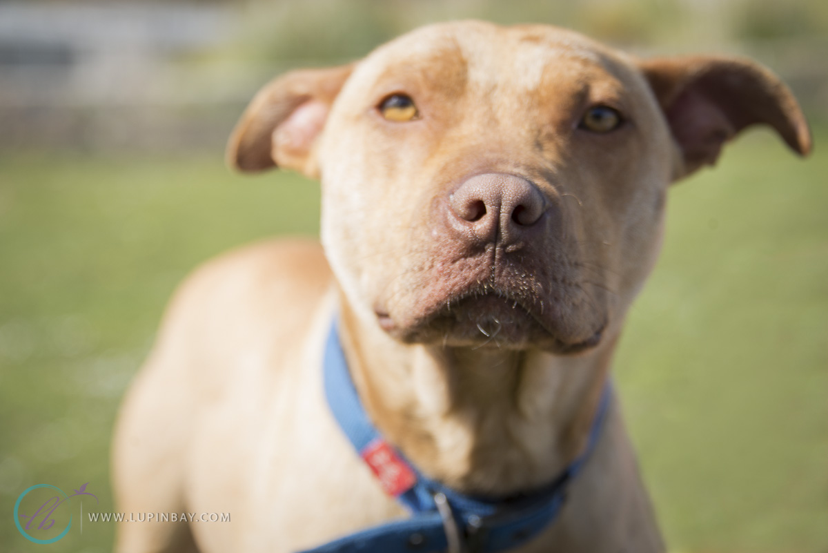 LupinBay_0052_SPCA-4386_Hero_Blog.jpg