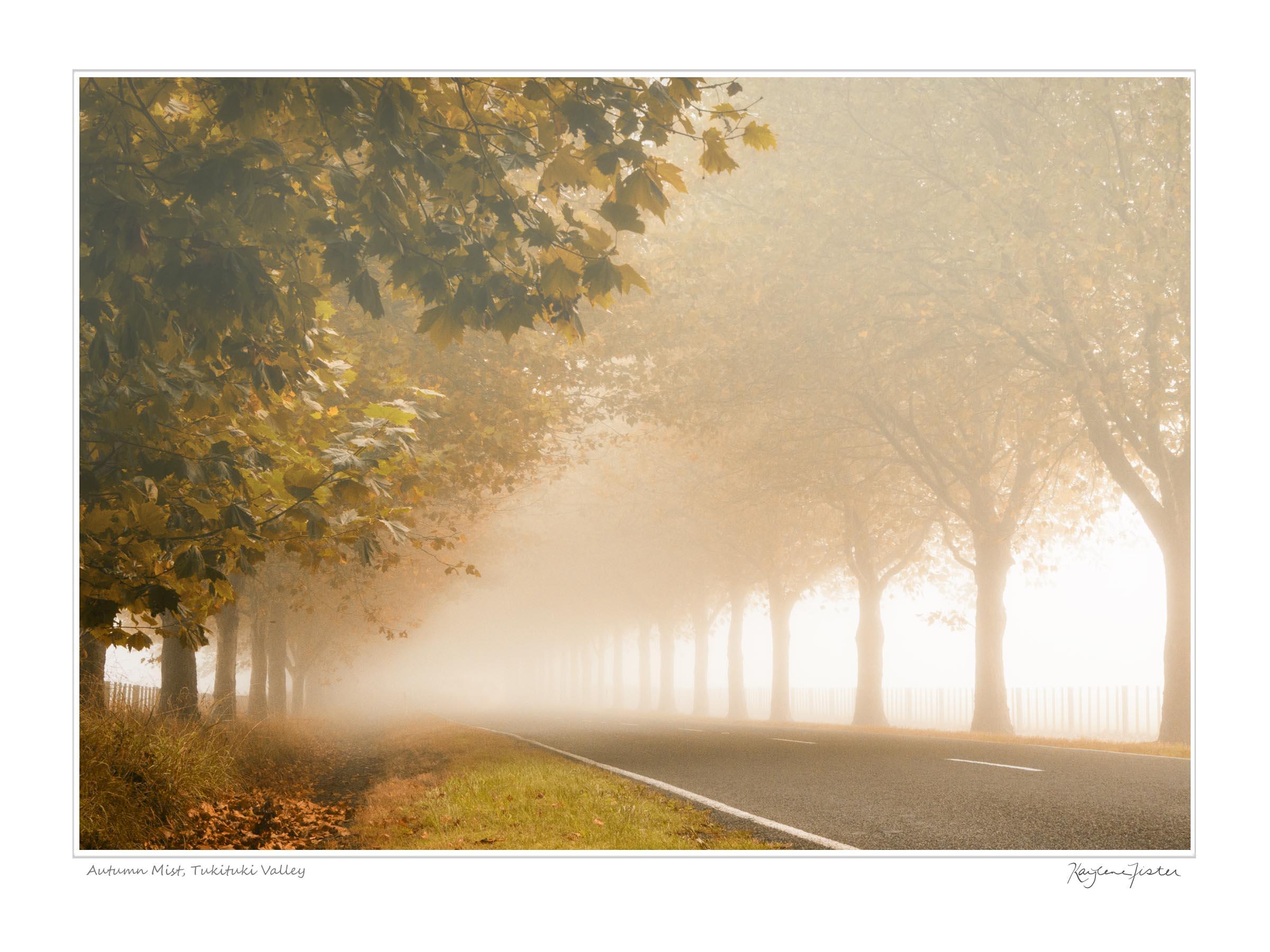 0079:6384 Autumn Mist, Tukituki Valley