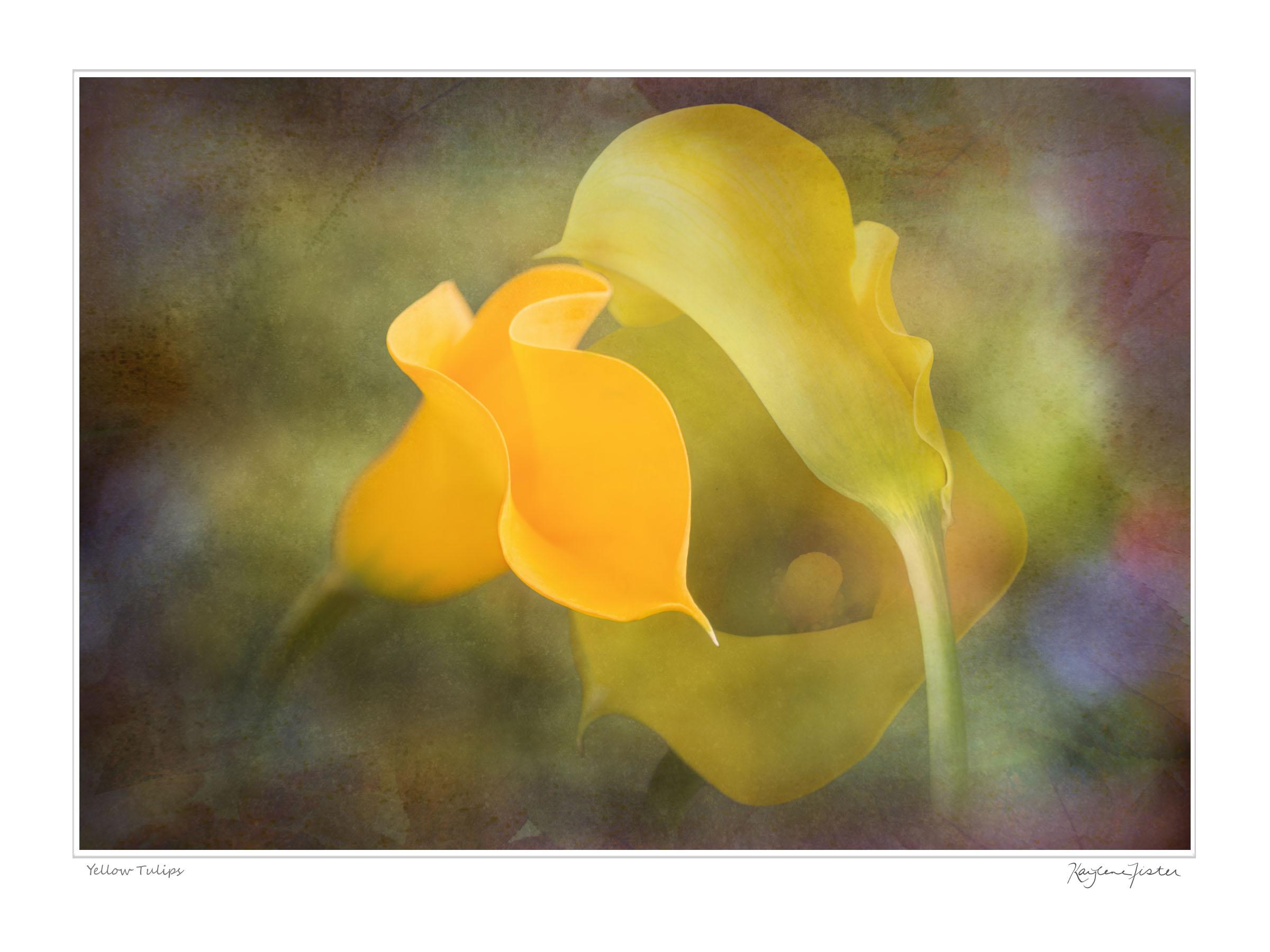 0084:6773 Yellow Tulip