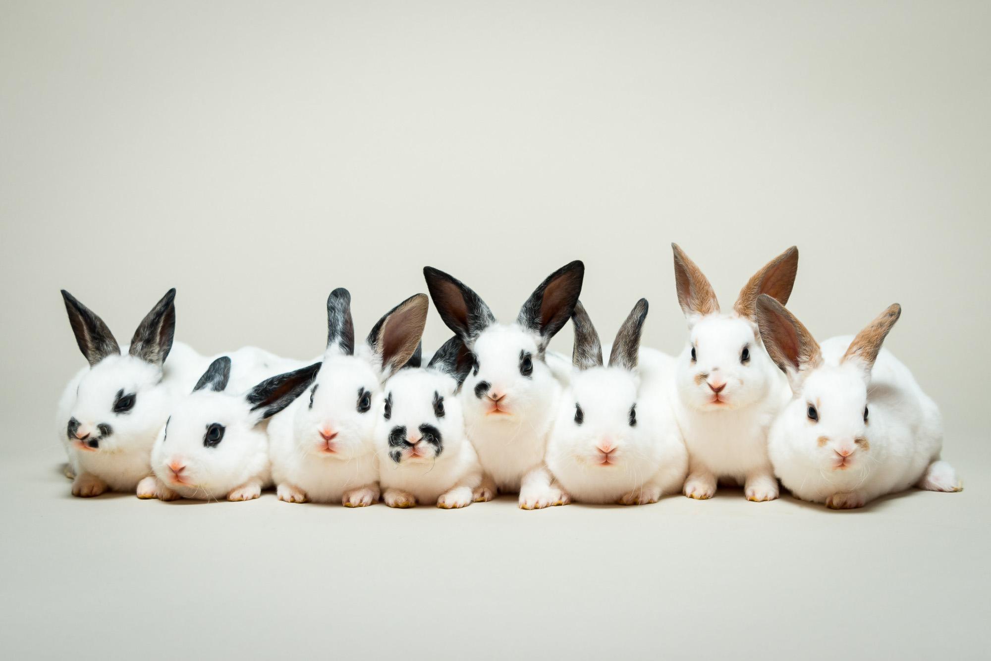 LupinBay_0098_Baby_Bunny_Rabbits-9056_LR.jpg