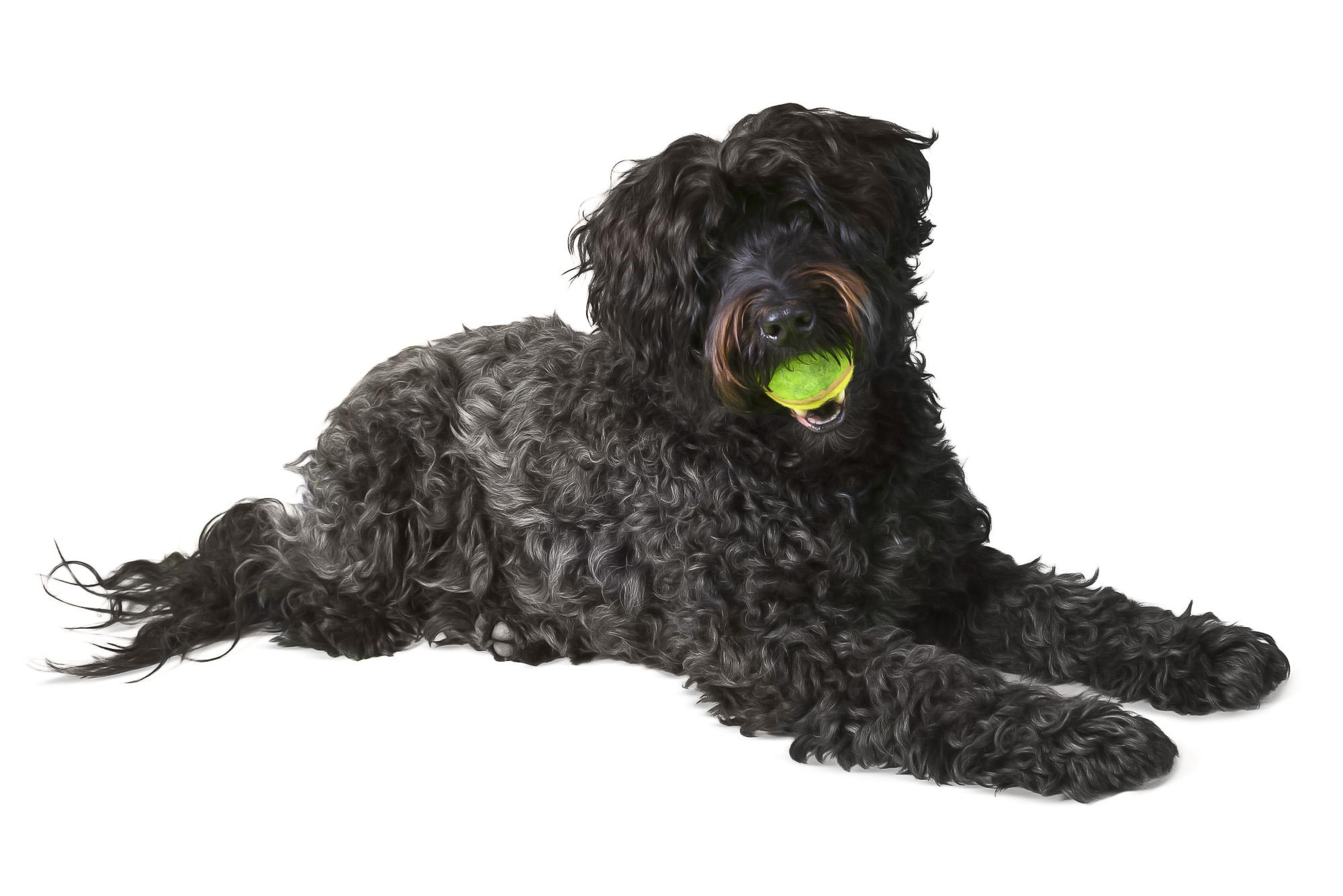 LupinBay-0115-Wheaten-Terrier-Tibetan-Terrier-Dog-Pet-Photography-0360.jpg