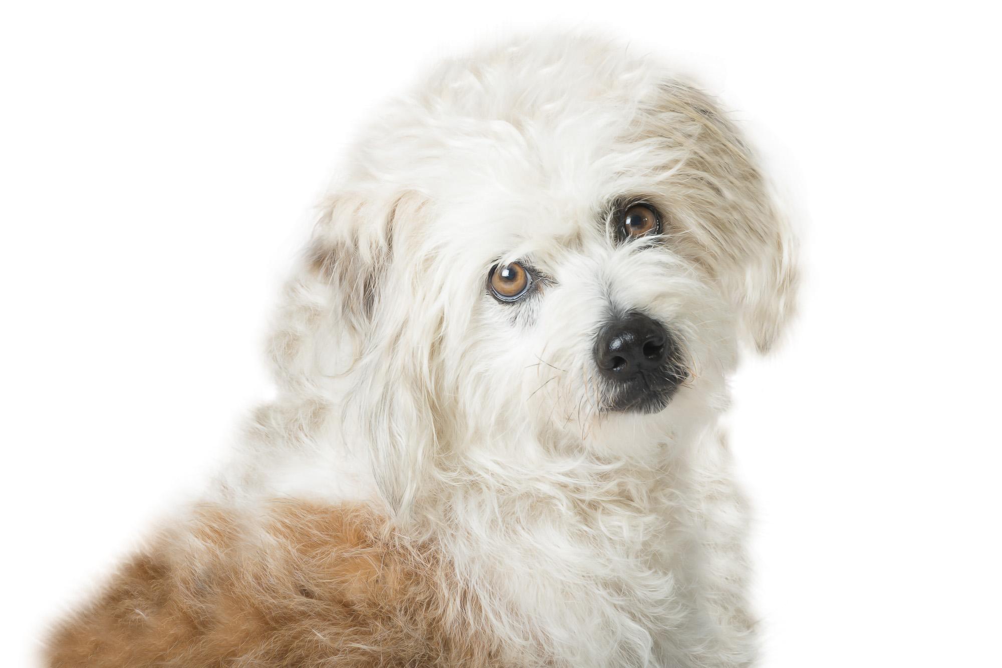LupinBay-0118-Dog-Pet-Photography-1515.jpg