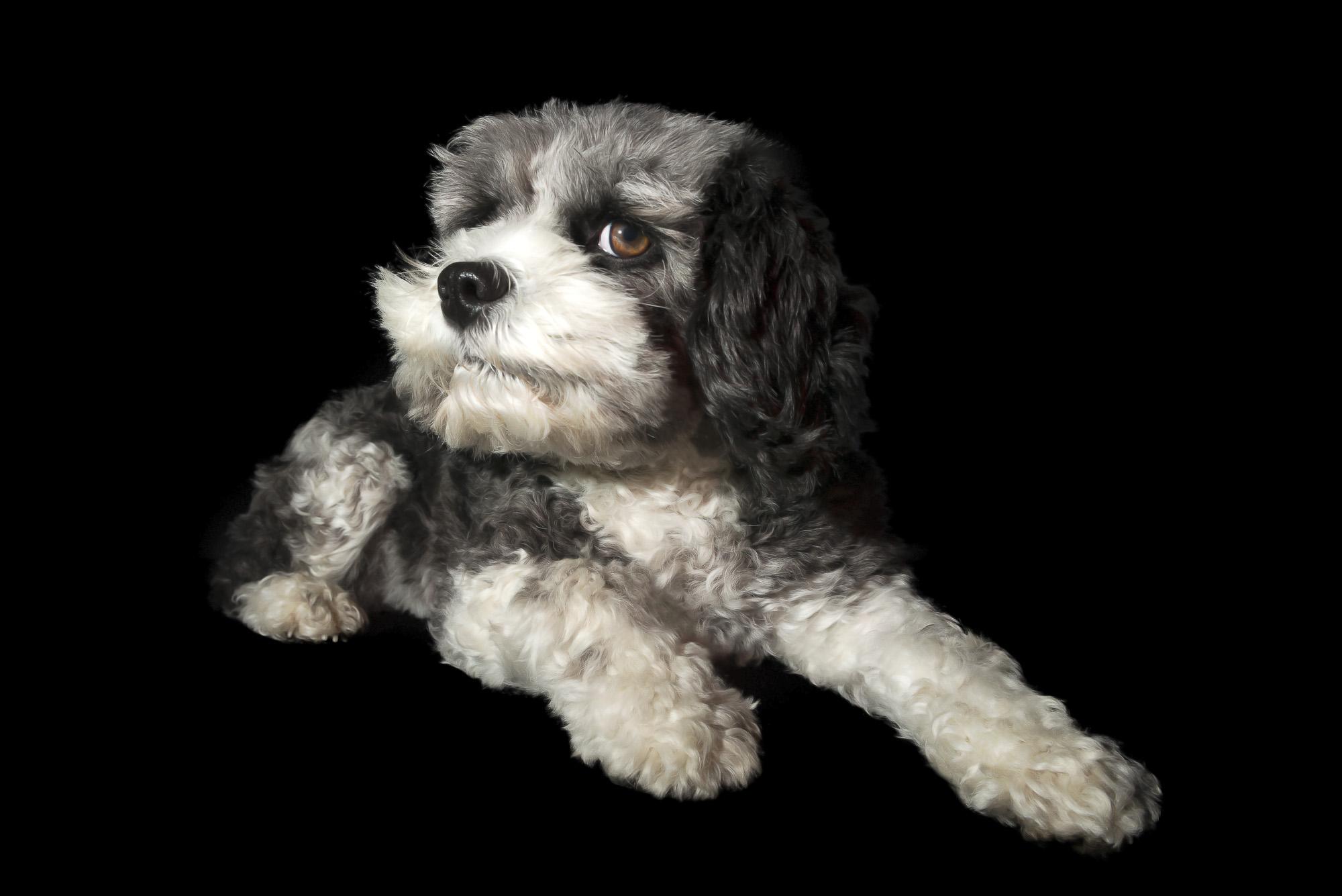 LupinBay-0118-Dog-Pet-Photography-1414.jpg