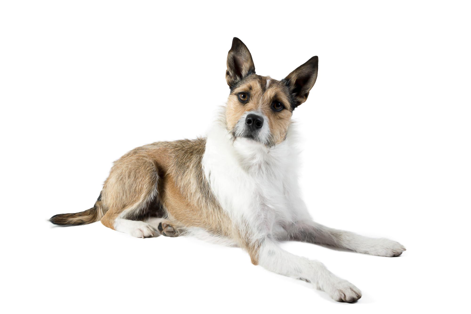 LupinBay-Dog-Pet-Photography-2277-Edit.jpg