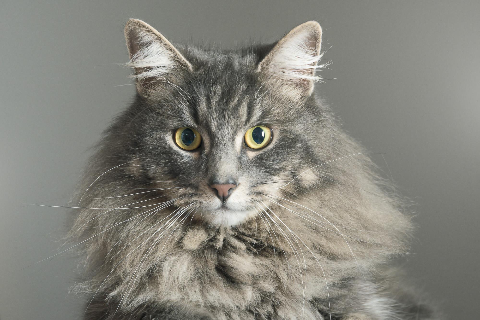 LupinBay-Cat-Photography-0136-3395.jpg