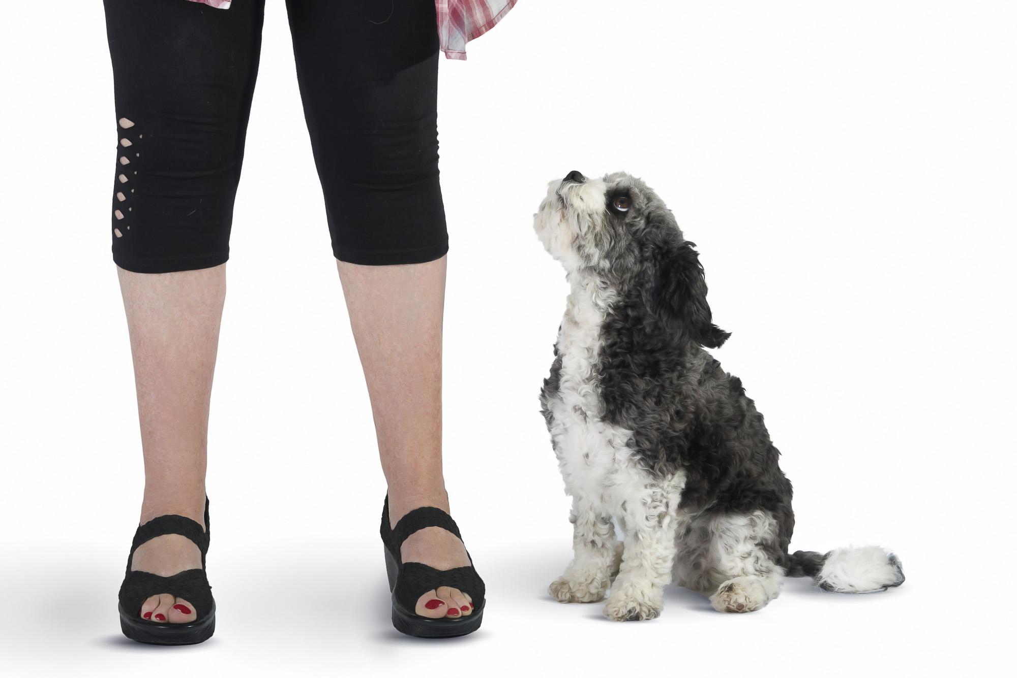 LupinBay-Dog-Pet-Photography-0118-1292.jpg