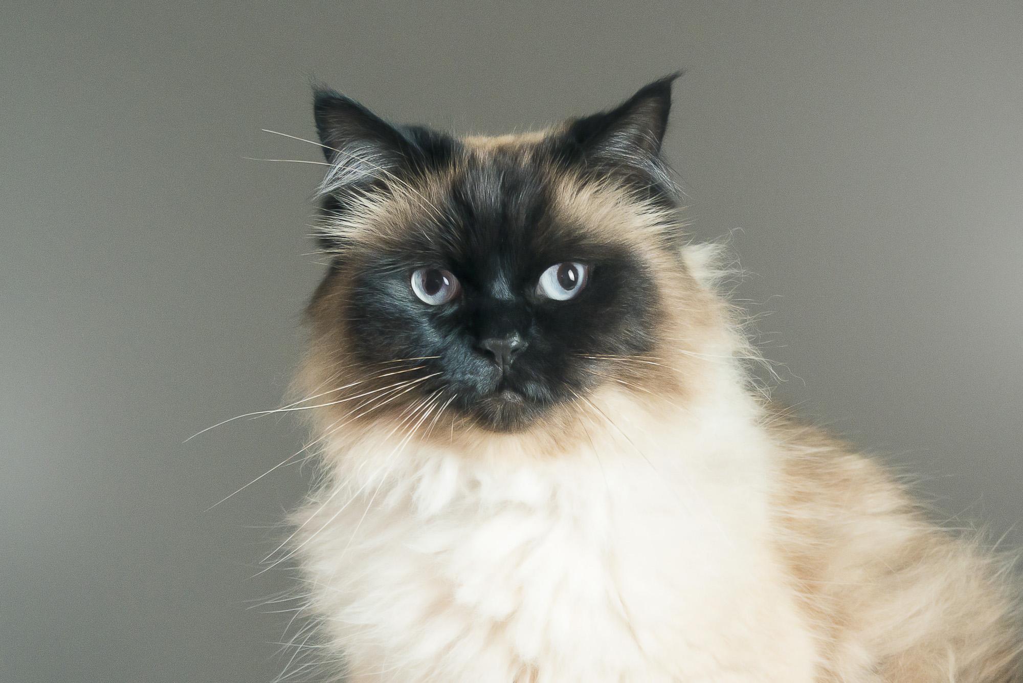 LupinBay-Cat-Photography-0134-3348.jpg