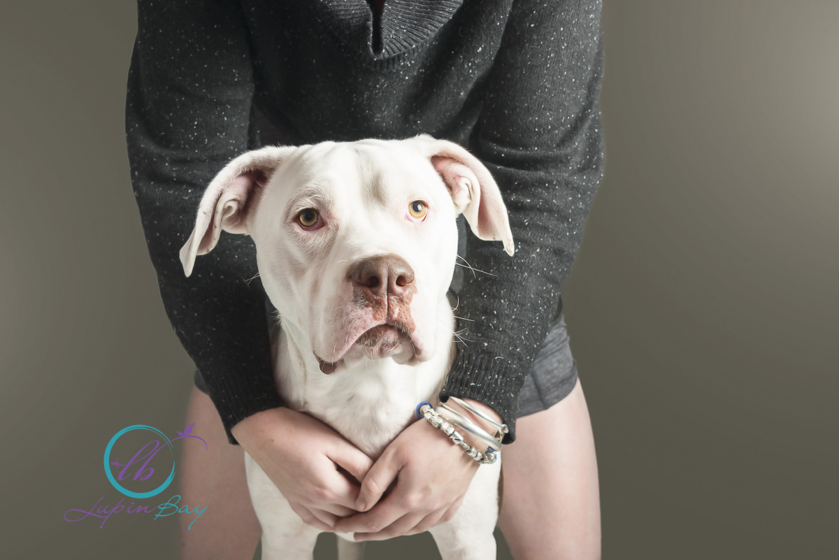 LupinBay-Dog-Crossbreed-American-Bulldog-Pitbull-0138-3492.jpg