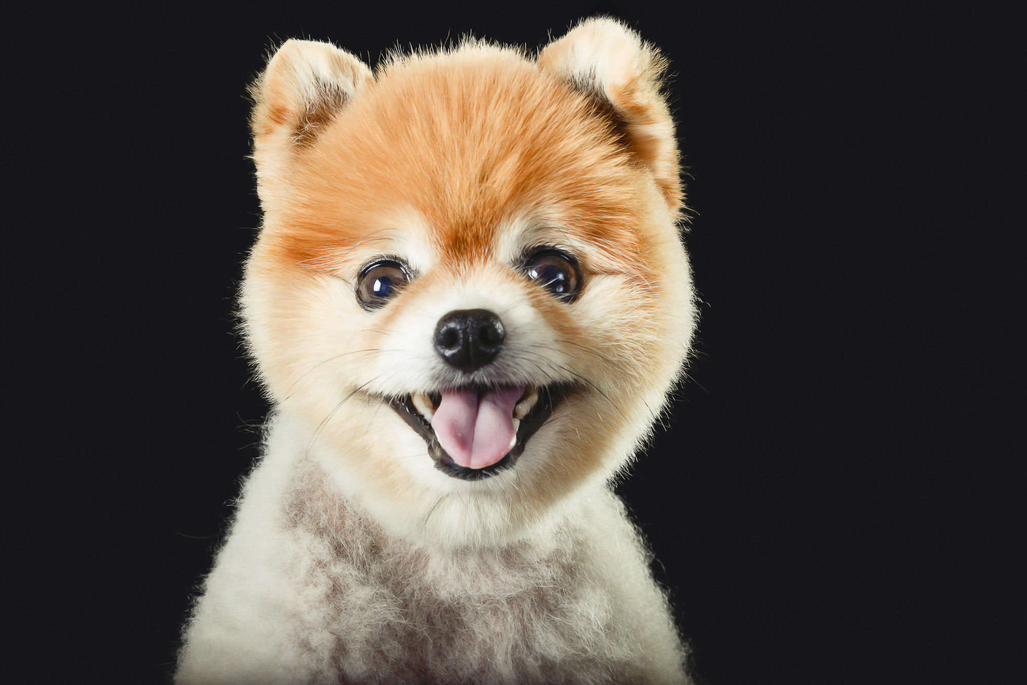 LupinBay_Dog_Pet_Photography_Pomeranian_0168_6505.jpg