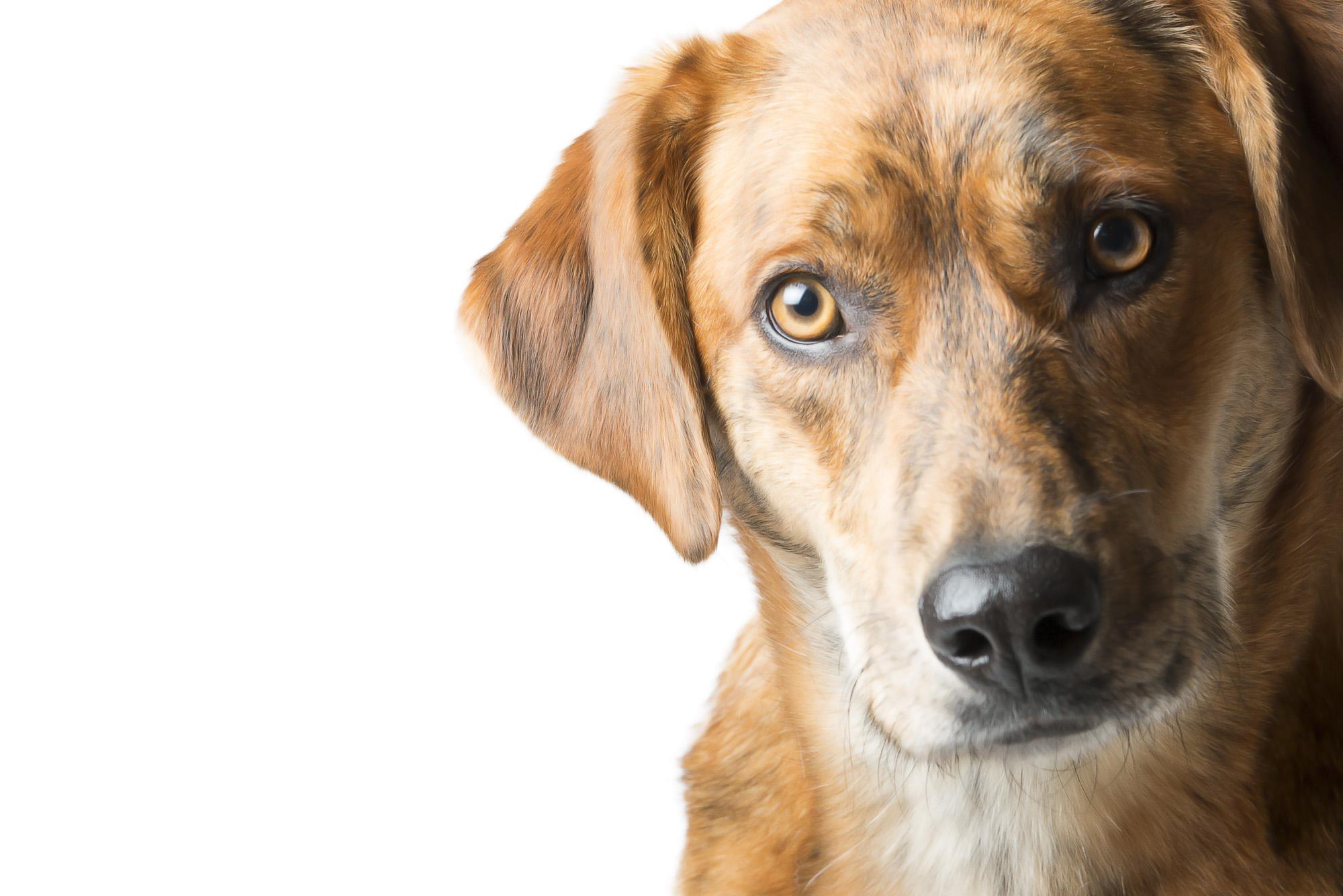 LupinBay-0127-Dog-Pet-Photography-2461.jpg
