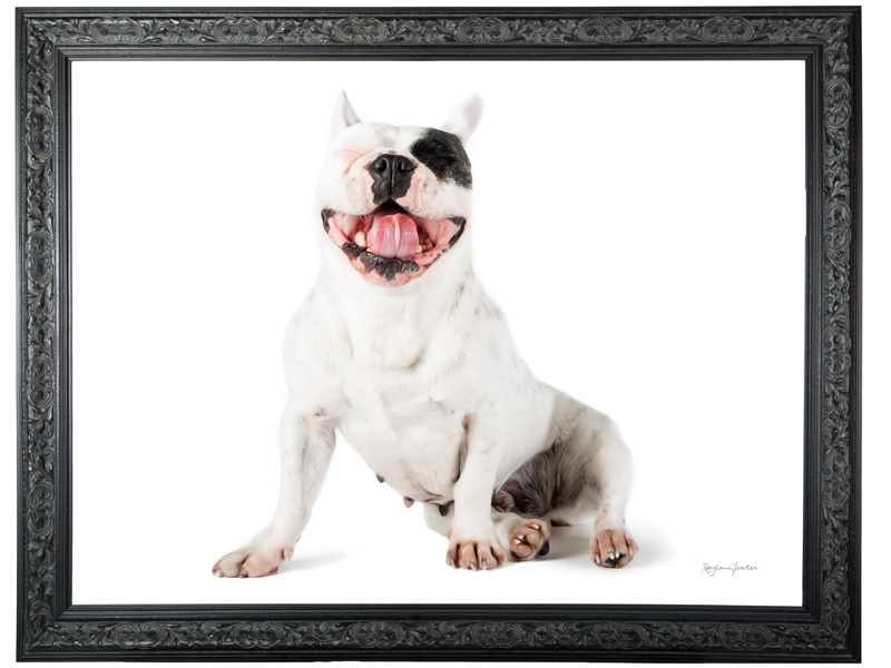 LupinBay-0101-0941-FRAME-7674-with-French-Bulldog.jpg