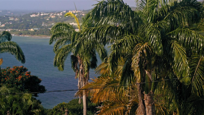 Tobago-InLove-Screen-Stills_9.2.1.jpg