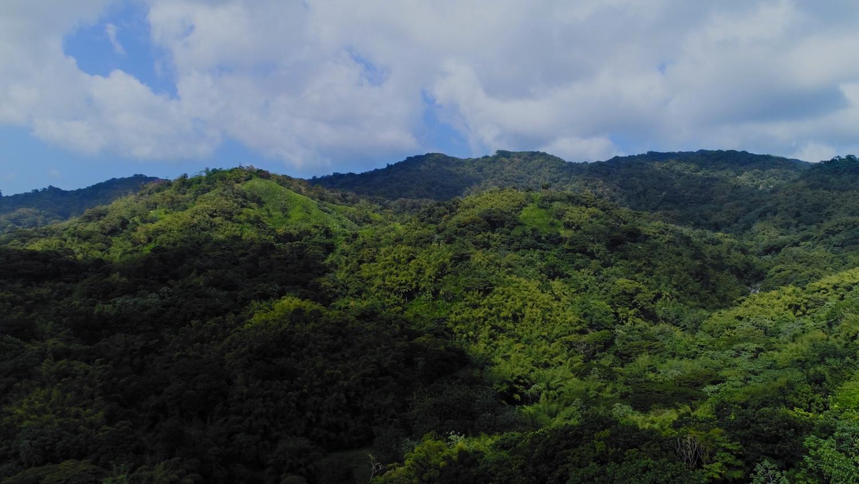 Tobago-InLove-Screen-Stills_46.1.1.jpg