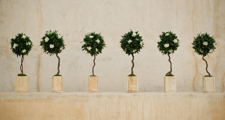 evergreen 6.jpg