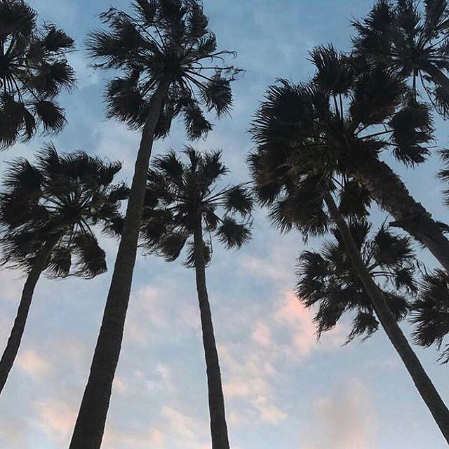 Dicen las palmeras que el verano ya está aquí... ¿Tú qué dices? #quesuertecurraraqui #ledf #laescaleradefumio 🌴😍